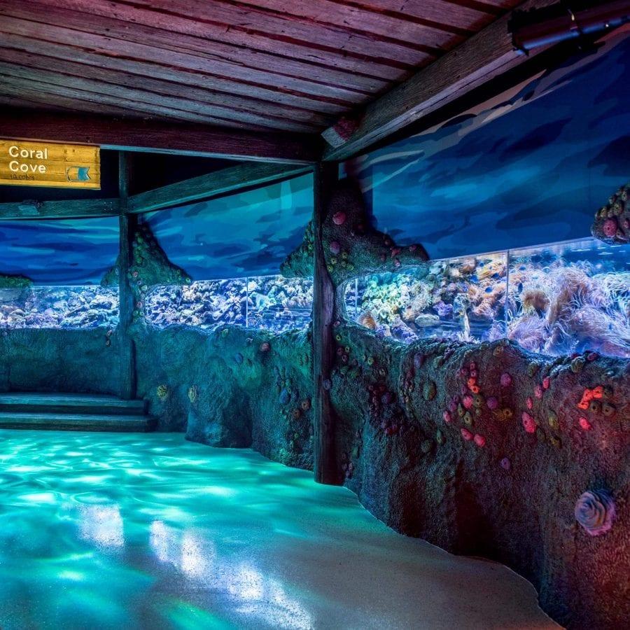 light installation Sydney Sea Life